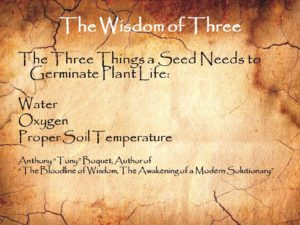The Wisdom of Three Seed Germination